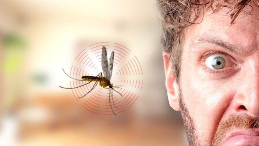 Pourquoi les moustiques font-ils du bruit lorsqu'ils s'approchent des oreilles humaines?