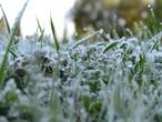 كيف تحمي النباتات من خطر الصقيع؟