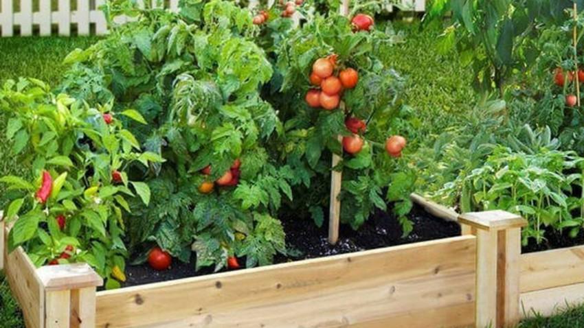 طرق زراعة الخضراوات في شرفة المنزل وعلى الأسطح