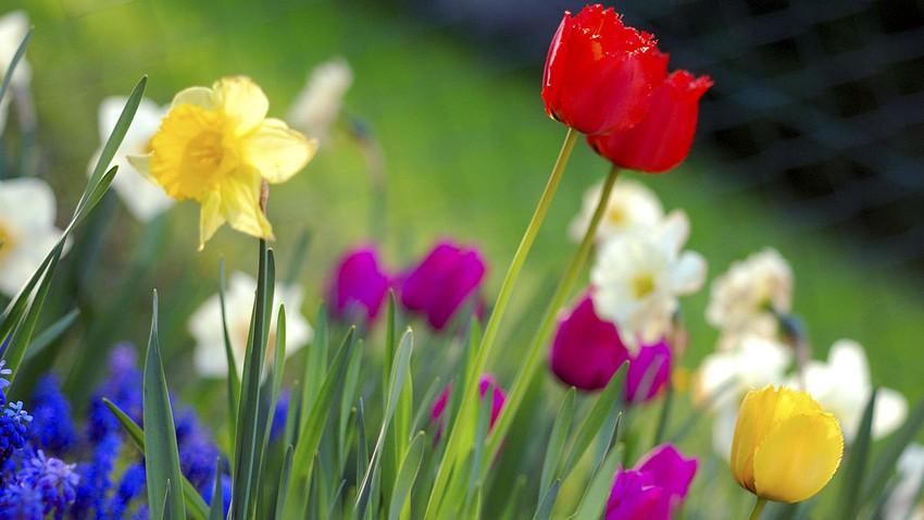 الأربعاء ... موعد الاعتدال الربيعي، فما هو وبما يتميز