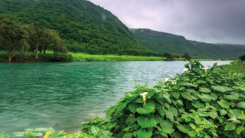 Learn about the fall of Salalah..the autumn season in the height of summer