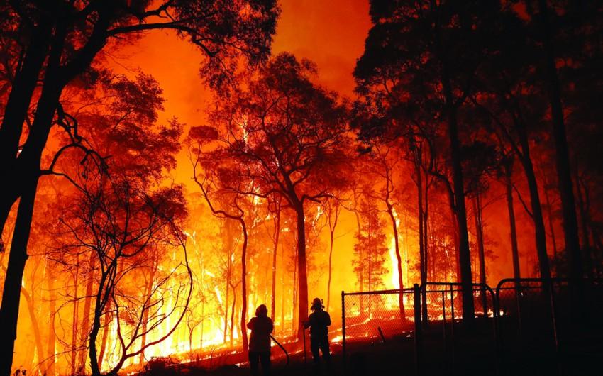 حرائق الغابات | أسبابها وأضرارها وطرق تفاديها ...