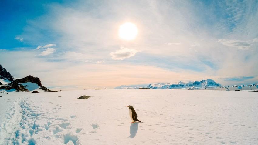 تأثير الثلج على الأرض