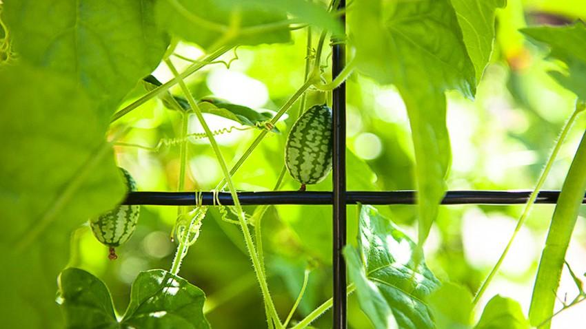 أفضل النباتات الصيفية التي يمكن زراعتها في حديقة المنزل