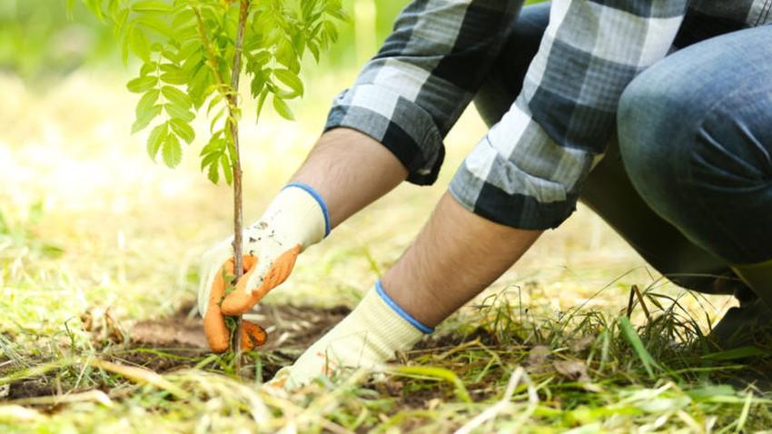 زراعة الأشجار ودورها في وقف تغير المناخ والتخفيف من عواقبه