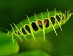 Exotic plant that eats insects