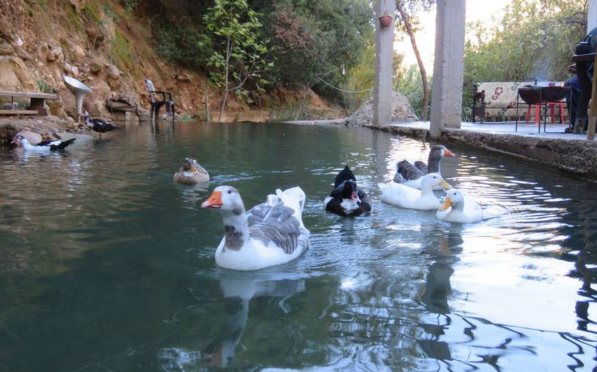 In pictures: Where to spend Eid al-Adha vacation in Jordan?