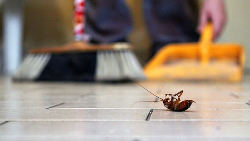 طرق آمنة للتخلص من الحشرات المنزلية التي تكثر في الأجواء الحارة