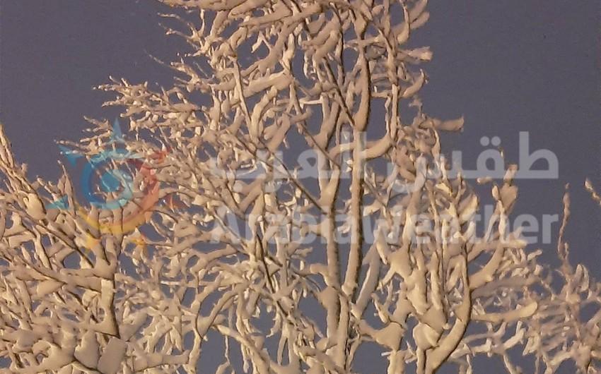 ثلوج الأردن | لوحات فنية مميزة من صنع الخالق 16 - 19 / 2 / 2021