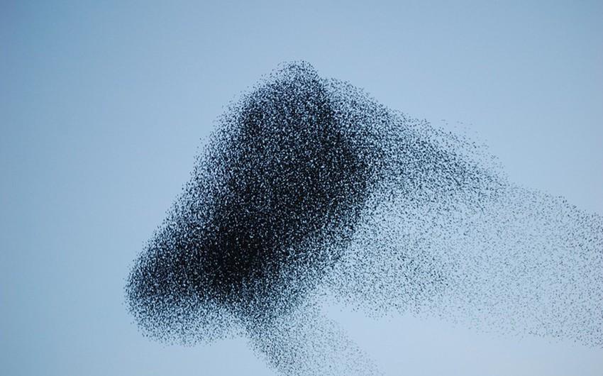 هجرة الطيور .. من أجمل اللوحات الطبيعية على الإطلاق