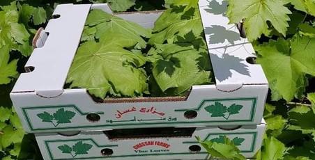 مزارع غسان لورق العنب البلدي - Ghassans Farm